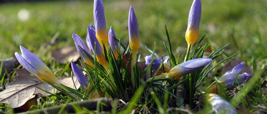 Dzisiaj, 20 marca, o godzinie 17.15 – zaczyna się astronomiczna wiosna