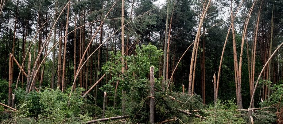 Śląskie: 1500 ha lasów, w tym 800 doszczętnie, zniszczonych po trąbie powietrznej.